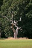Tree 361m away
