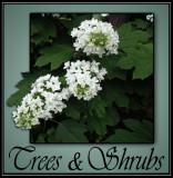 Trees & Shrubs @ Rick's Custom Nursery