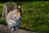 Squirrel, Nothe Gardens, Weymouth