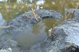Wetlands Outflow Cleaned by the City Causing Near Total Drainage
