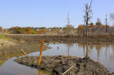 Haverhill Wetland After Draining Looking East