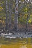 Haverhill Wetlands After Dtaining Old Level.jpg