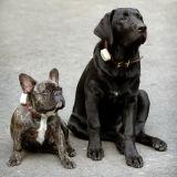 Eddie and Duke.jpg