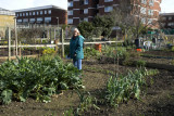 Cable Street Community Gardens, East London