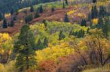 Durango - Hillside Color 1