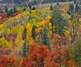 Durango - Hillside Color 2