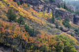 Ouray - Hillside Fall Color