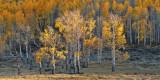 Ridgeway - Aspen Hillside