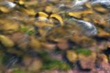 Roaring Forks River Closeup 1