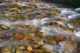 Roaring Forks River Closeup 2