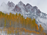 CO - Snowmass Area - Snowy Fall Color 11