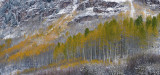 Snowmass Area - Snowy Fall Color 3
