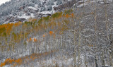 Snowmass Area - Snowy Fall Color 5
