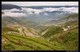 Jinkeng Rice Terraces