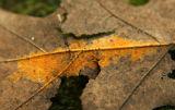 IMG_4988 fungi on leaf.jpg