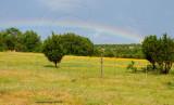 rainbow over wildflowers
