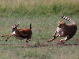 Day Eight - Maasai Mara Game Reserve