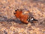 Birds of South Africa - Kruger National Park