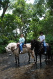 Horseback Ride in the Waipi'o Valley