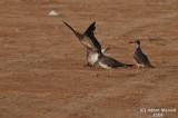Bird 101 - Stretching Wings.JPG