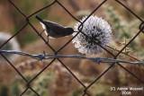 Bird 105 - Struggle for Foold.JPG