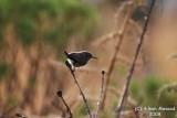 Bird 106 - Relaxing.JPG