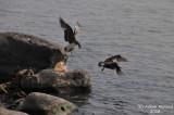 Bird 120 - No one else come here.jpg