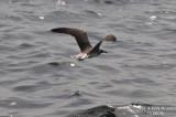 Bird 124.jpg