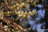 Spring affect - 055g.JPG