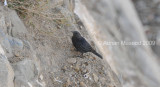 Bird_654.jpg