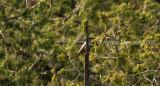 Bird_661.jpg
