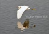 Bird_669.jpg