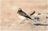 Bird_679.jpg