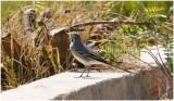Bird_680.jpg