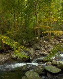 Along an Autumn Stream