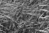Black White & Grey - Nature