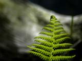 natural imaging 8