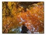 autumn colours / Herbstwald (2258)