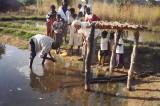 Stocking the pond