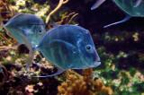 Faune aquatique / Aquatic fauna