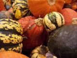 grocery store gourds
