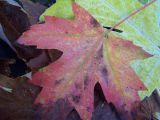 soft fall color