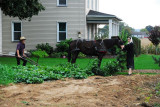 Young Amish couple tilling garden in Intercourse, PA