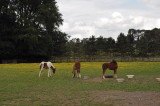 Tommy's foal and playmates