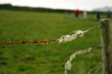 Trace of the sheep : Rian na gcaorach