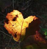 Loving Fall ~ October 24th