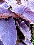 Plush Purple Plant ~ September 18th