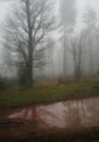 rainy and misty