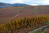 Wolxheim, Altenberg vineyard.