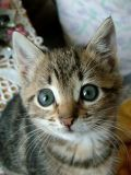 I'm sooooo cute!